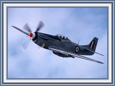 mustang-joy-flights5.png